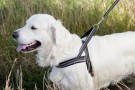 Dog T Harness Active thumbnail